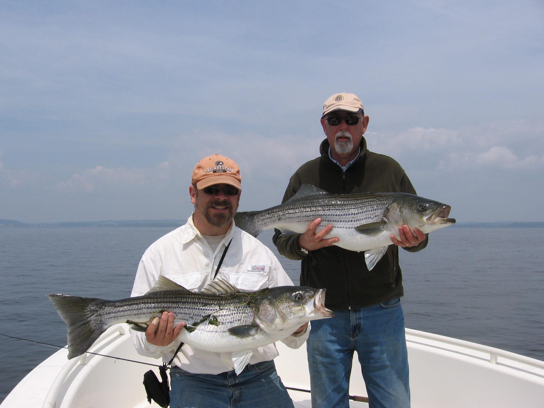 Fishing by season fly fish the chesapeake bay for Chesapeake bay fish
