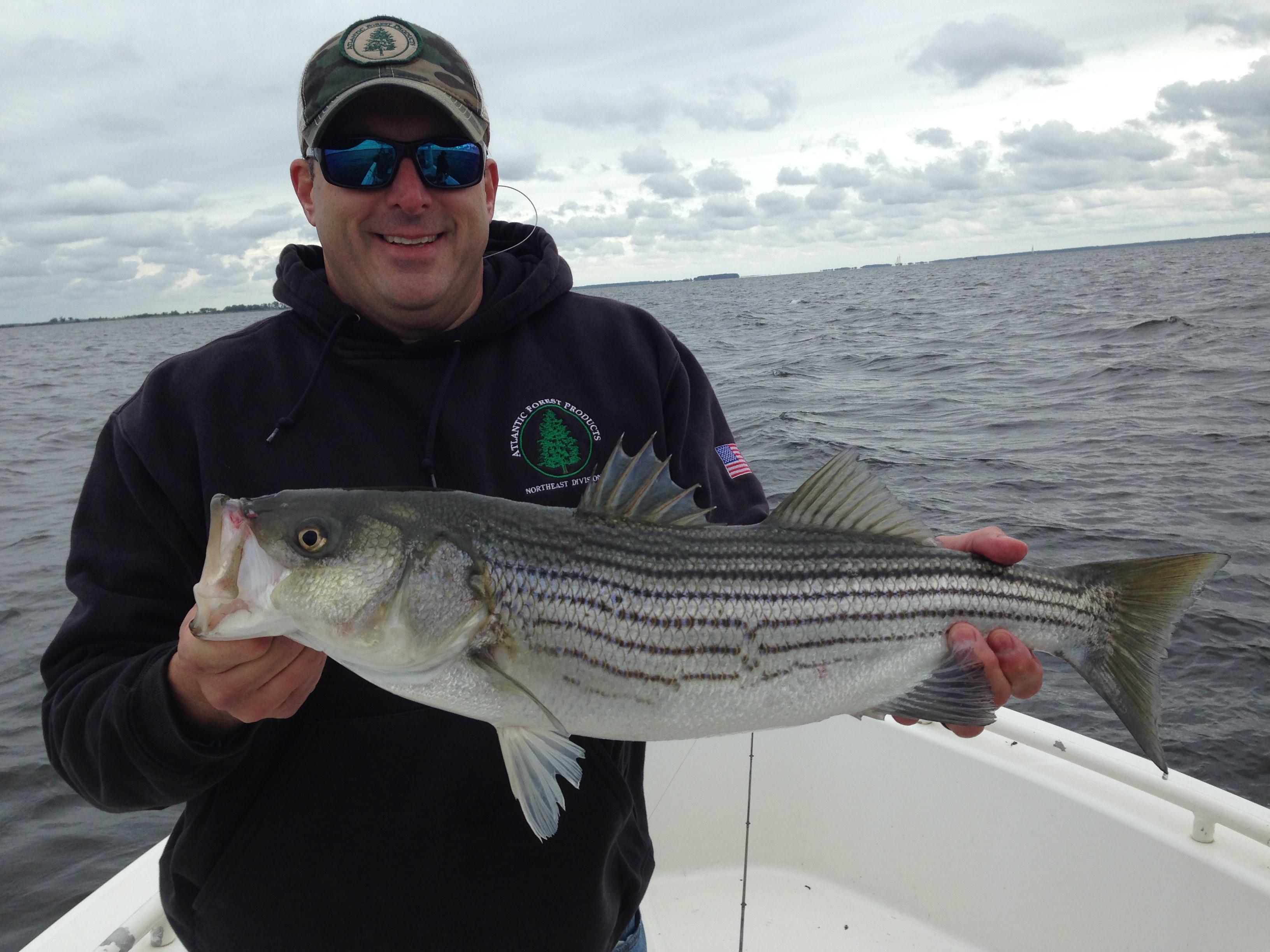 5 13 17 fly fish the chesapeake bay for Fishing chesapeake bay