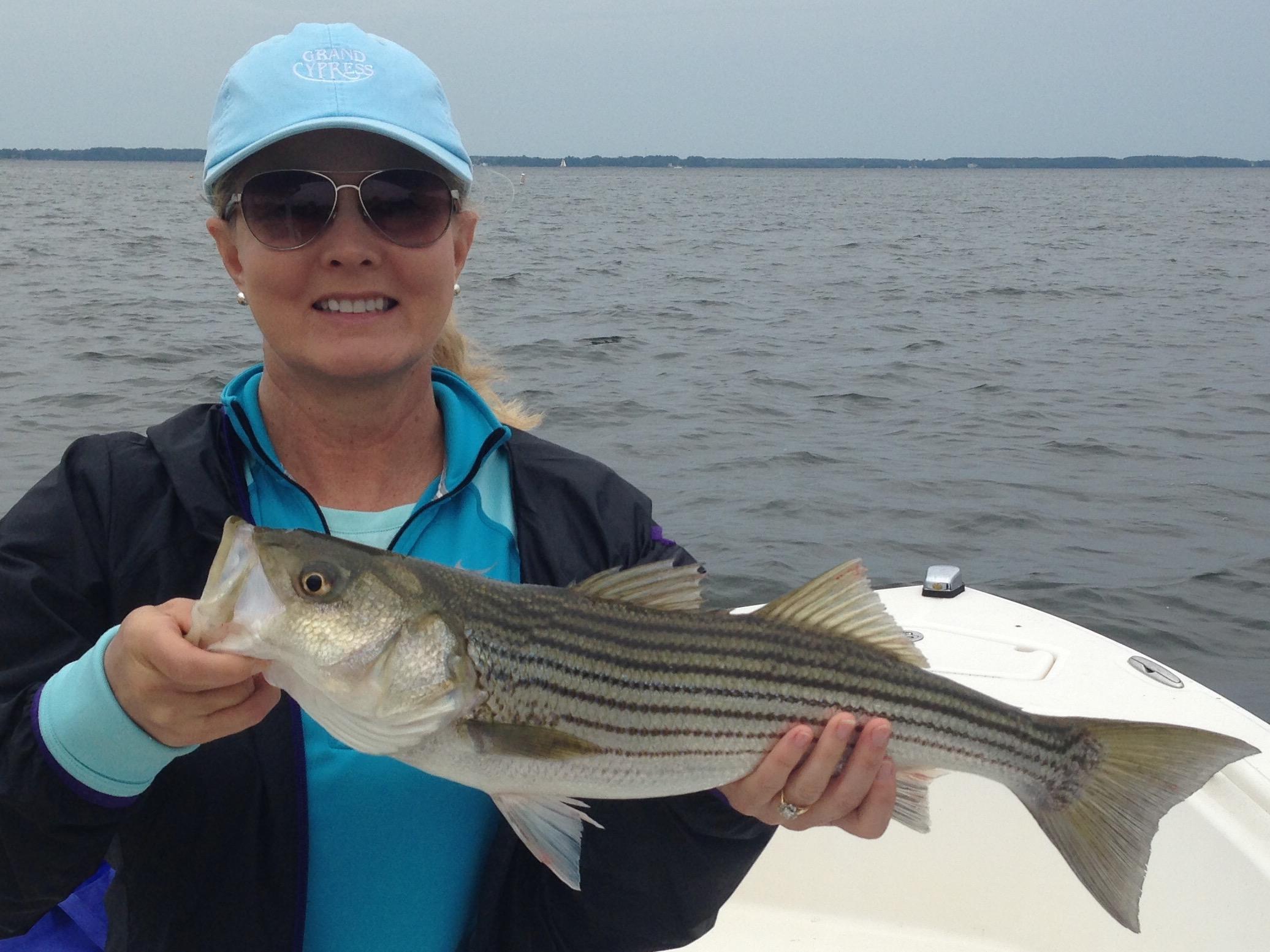 6 8 17 fly fish the chesapeake bay for Fishing chesapeake bay